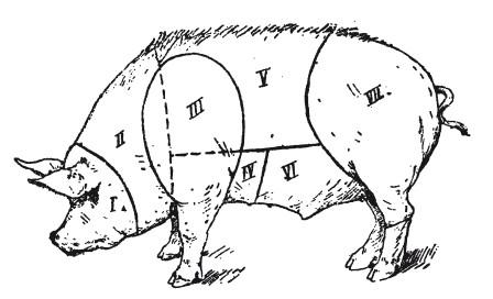 Подчеревок свиньи на схеме