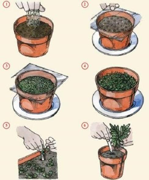 Как размножать за папоротник в домашних условиях