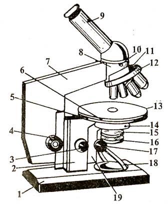 Строение микроскопа. Схема, описание, параметры микроскопов.
