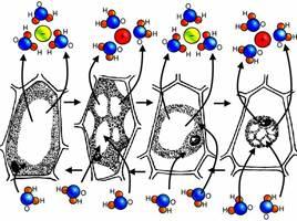 Строение и функции клеточной оболочки