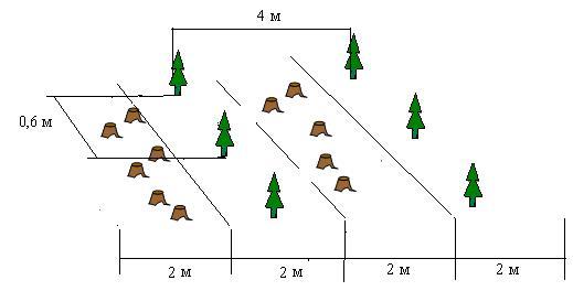 Методы выращивания леса 68