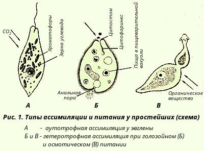 Формы размножения организмов схемы