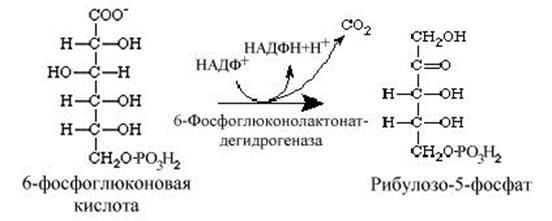 Цикл кребса реакции
