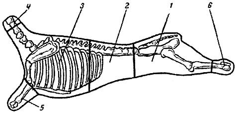 Схема отрубов баранины
