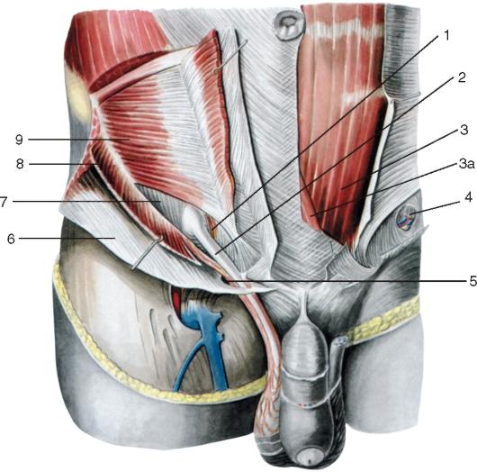 разрыв мышцы в ппховой области операция песен своей страницы