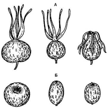 внешние признаки паразитов в организме человека
