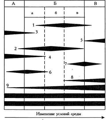 классификация браун бланке - фото 7