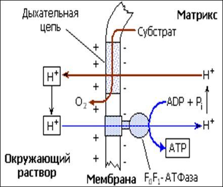 Схема окислительного