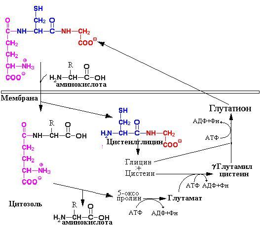 синтез трипептида в две