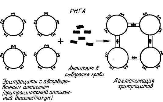 реакции антиген – антитело