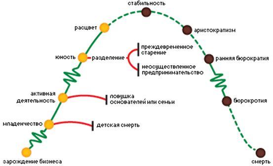 Этапы жизненного цикла