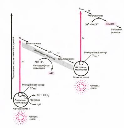 Перенос электронов является