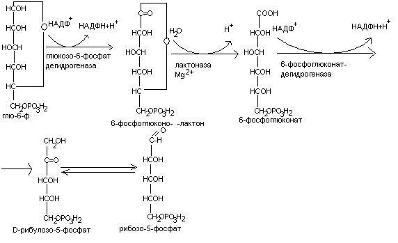 нуклеиновых кислот.