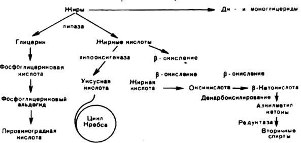 Рисунок Г.5 – Схема разложения