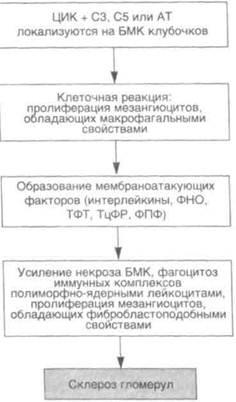 Гломерулонефрит схема