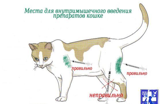 Как кошке сделать укол глюкозы