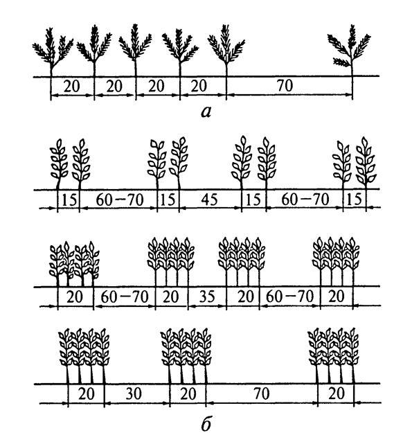 Схема ленточных посевов для
