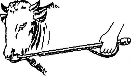 Как сделать веревку для быка