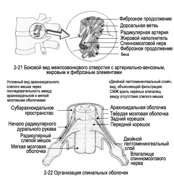 Спинномозговой канал