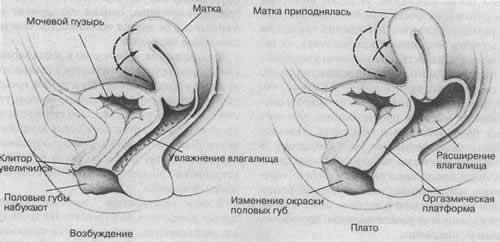 восстановление организма после оргазма-бс1