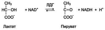 Изоферменты креатинкиназы