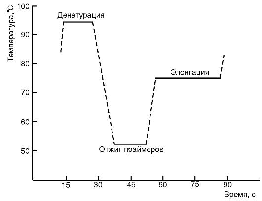 Реакция пцр микробиология 11