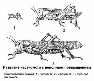 У каких насекомых личинки