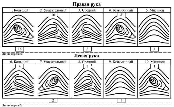 Дактилоскопические узоры